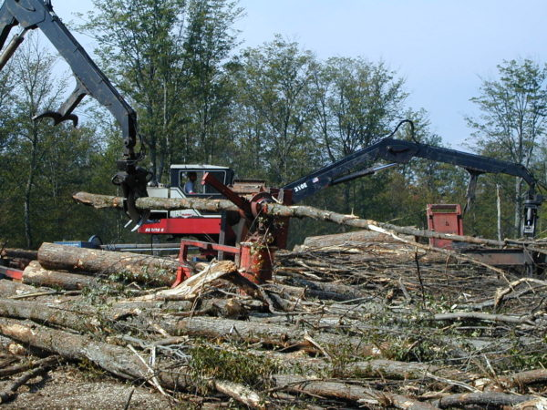 Harvesting logs at Catamount Forest