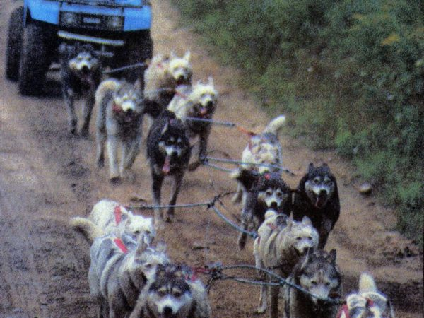 Musher Spencer Thew training sled dogs with an all-terrain vehicle in Colton