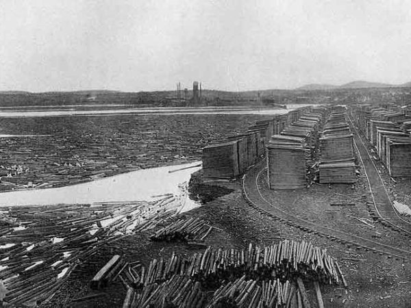 Logs in the Raquette Pond in Tupper Lake