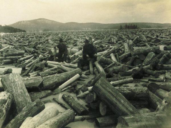 Pulpwood logs in Rock Island Bay in Tupper Lake