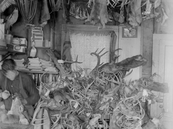 Taxidermist mounting a deer head in the Adirondacks
