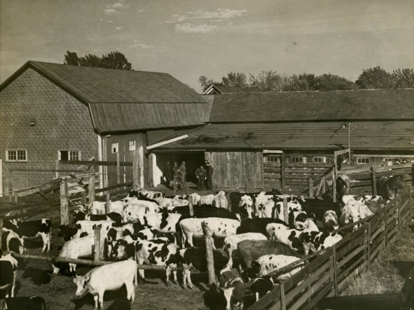 The paddock area at H.L. Neverett & Sons Livestock Commission in Chazy