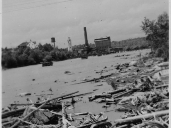 Pulp Logs floating outside the International Paper Mill in Piercefield