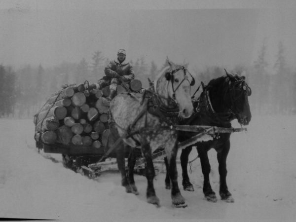 Hauling a bob sled of logs in Tupper Lake