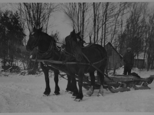 A team of horses hitched to a bob sled in Tupper Lake