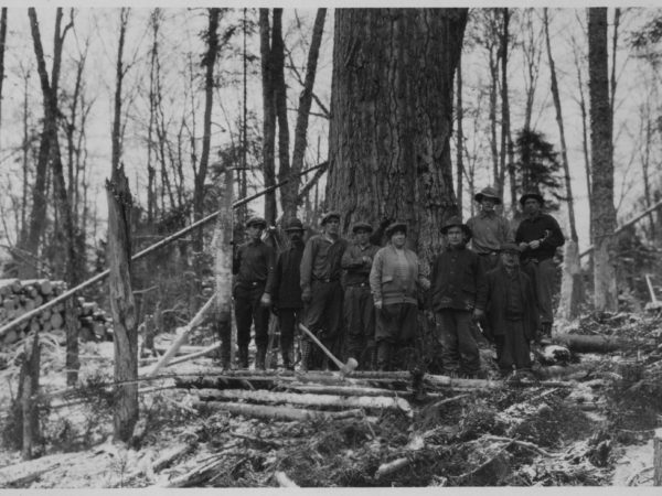 A group of loggers next to a large tree near Tupper Lake