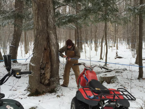 Maple Sugaring in West Chazy