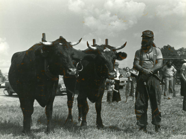 David Duff with two oxen in Hammond