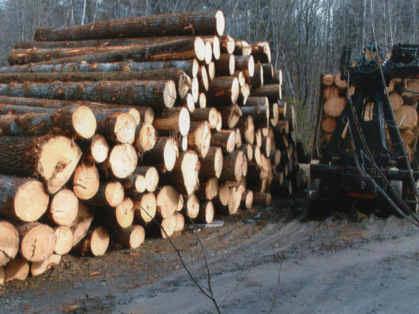 A stack of white pine logs in Elizabethtown