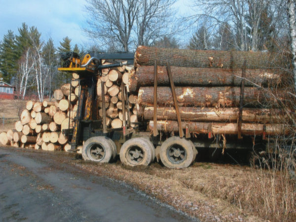 A stack of white pine logs on a loader in Elizabethtown