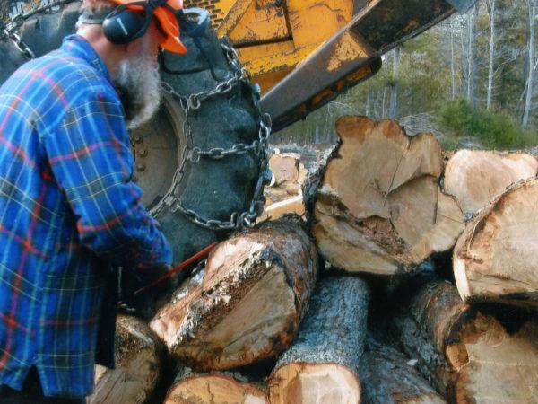 Lumberjack measuring maple logs in Elizabethtown