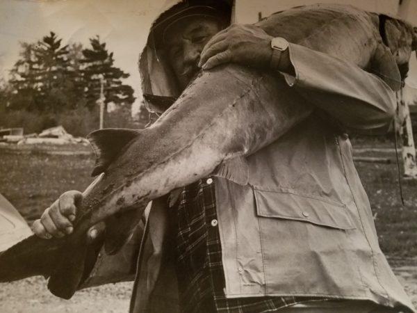 A Freshly Caught Sturgeon in Alexandria Bay