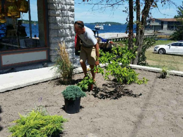 A Thousand Islands Landscaping worker arranging plants in Alexandria Bay