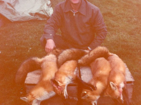 """Preacher-trapper"" Roy Johnson with fox pelts in Morristown"