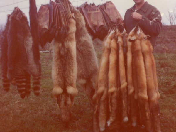 "A rack of pelts trapped by the ""preacher-trapper"" in Philadelphia"