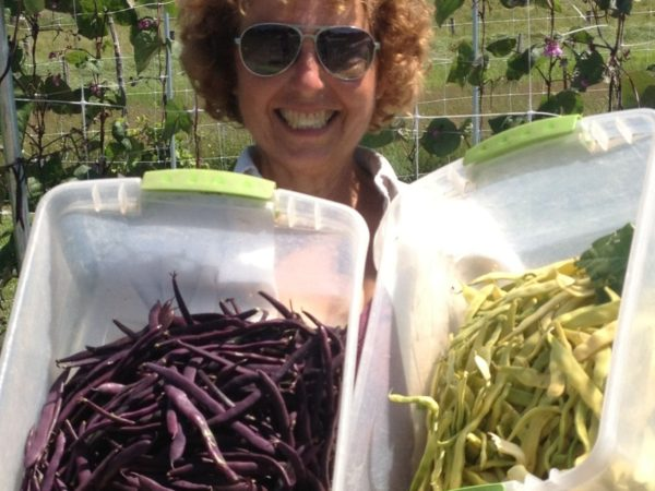 Dani Baker picking beans at Cross Island Farms on Wellesley Island