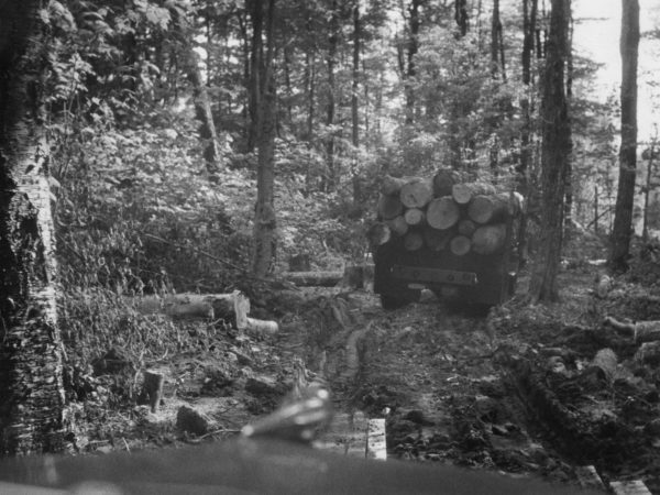 Hauling Logs for the Triangle Lumber Company in Onchiota