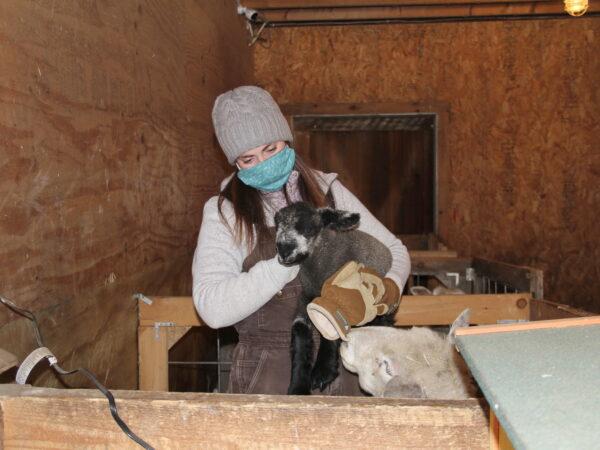 Erica Burns holding a lamb